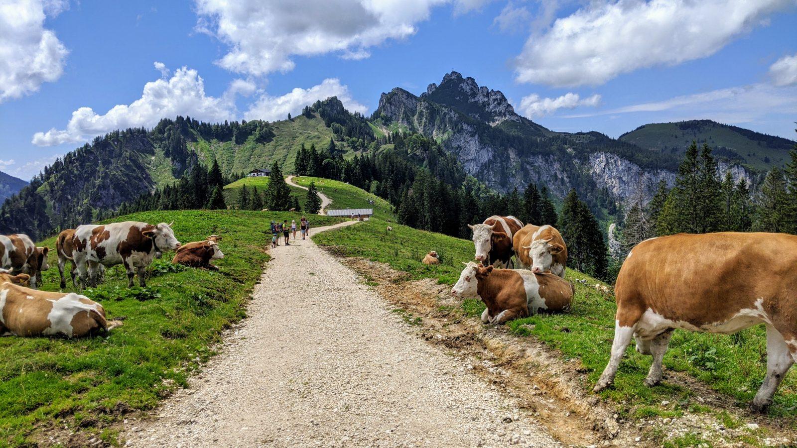 Unterwegs in den Chiemgauer Alpen: Auf dem Weg zur Piesenhauser Alm